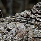Little Lizard by Rick Playle
