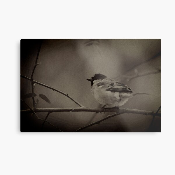 The impressionist sparrow Metal Print