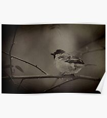 The impressionist sparrow Poster