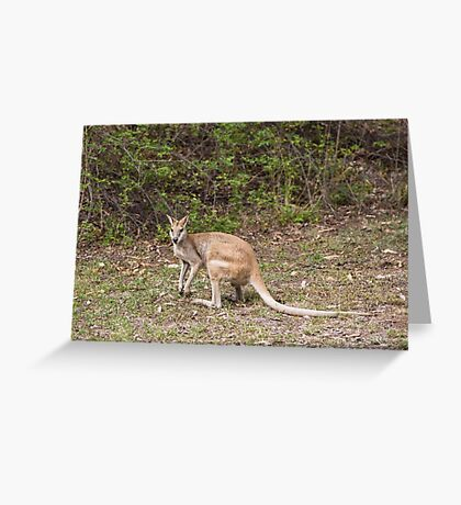 Wallaby at Katherine Gorge, Australia Greeting Card