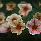 Flowers In 3D by Keith G. Hawley