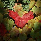 Those Autumn Leaves..... by Sandra Cockayne