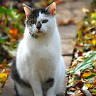 Milli - Enjoying the Garden in Fall by vbk70