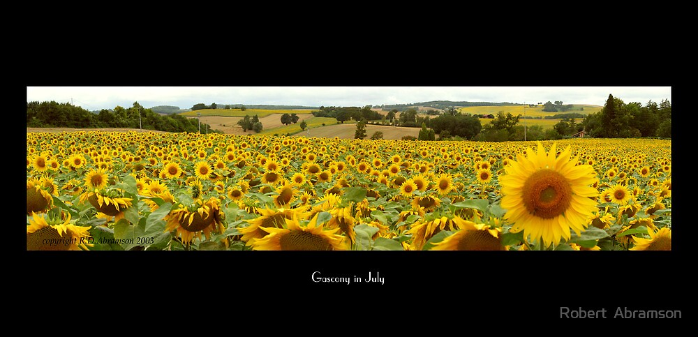 Sunflower Field in Gascony, France by IzoneVision