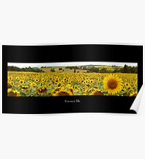 Sunflower Field in Gascony, France Poster