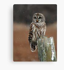 Barred Owl  2 - Ontario Canada Canvas Print