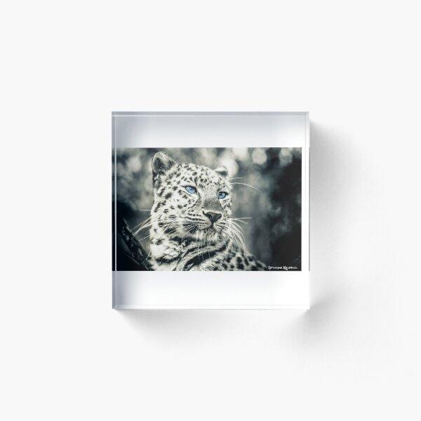 Love Panther III Acrylic Block