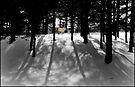 Spirit Pony in Tree Shadows by Wayne King