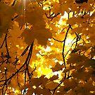 Yellow Star by Scott  Hafer