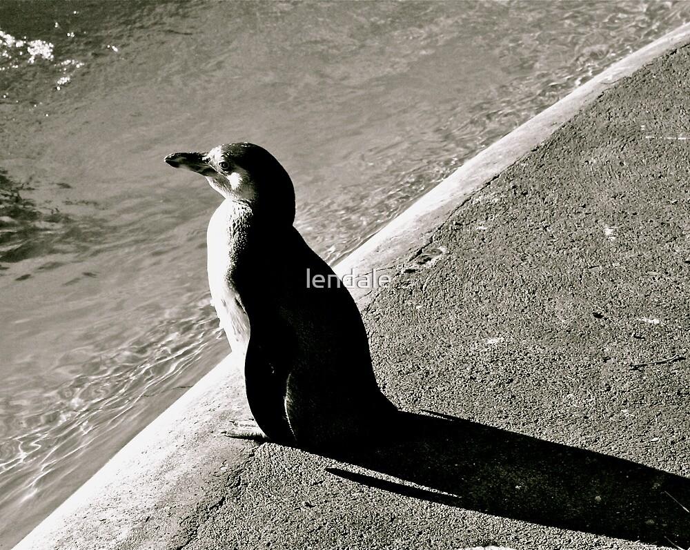 Penguin B&W Shadow by lendale