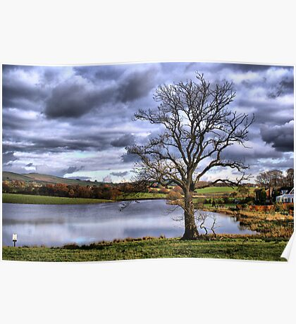 Lonely Tree At the Trout Lake Poster