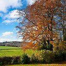 Devonshire Autumn by George Parapadakis (monocotylidono)
