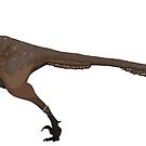 Austroraptor (No Background) by JedTaylor