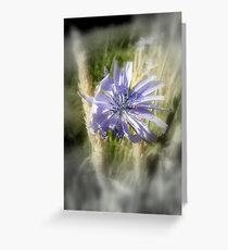 chicory flowers 2 Greeting Card