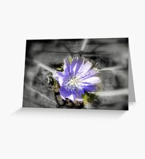 chicory flowers 3 Greeting Card