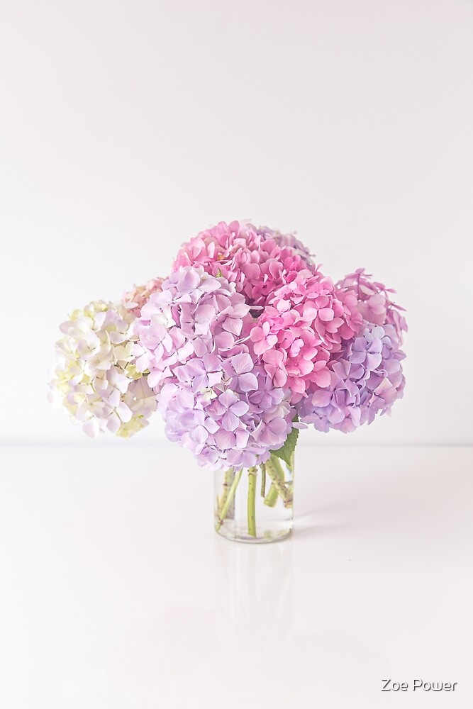 Pastel Hydrangeas in pinks and purples by Zoe Power