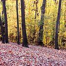 In Golden Woods by MarjorieB