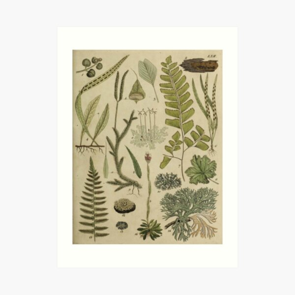 Ferns And Lichen Art Print