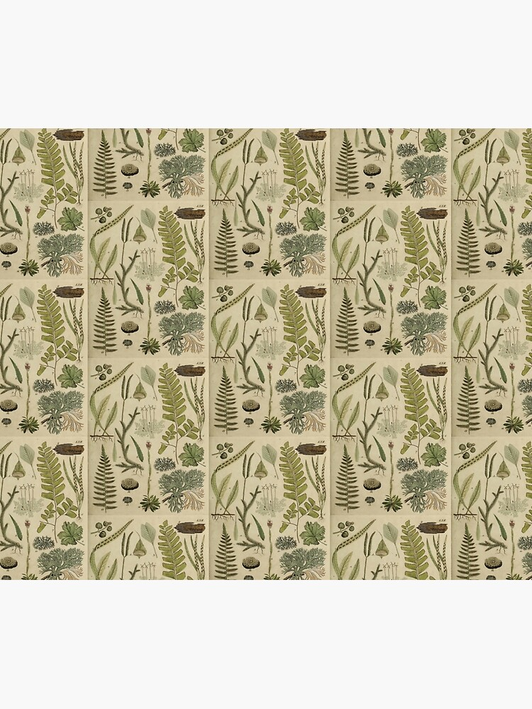 Ferns And Lichen by bluespecsstudio