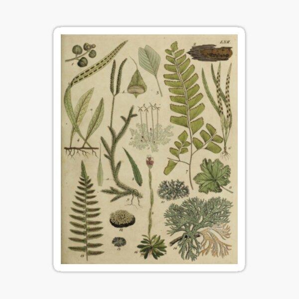 Ferns And Lichen Sticker