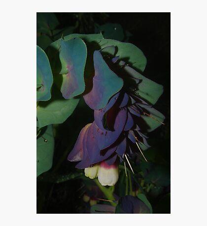 Unusual flower Photographic Print