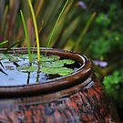 Small pond by - Zig -