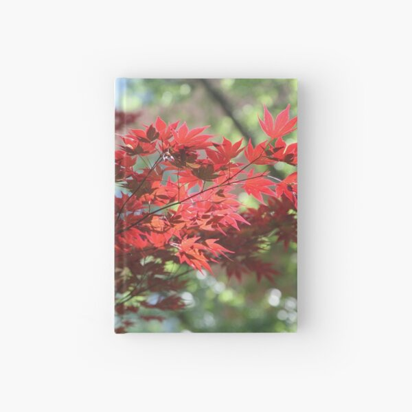 Fall colors. Hardcover Journal