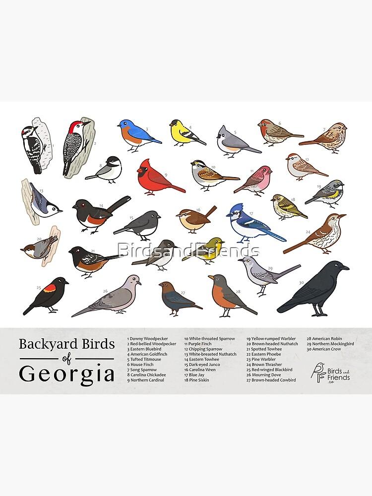 Georgia - Backyard Birds of Georgia Field Guide Print - Bird Art Print - BirdsandFriends.co by BirdsandFriends