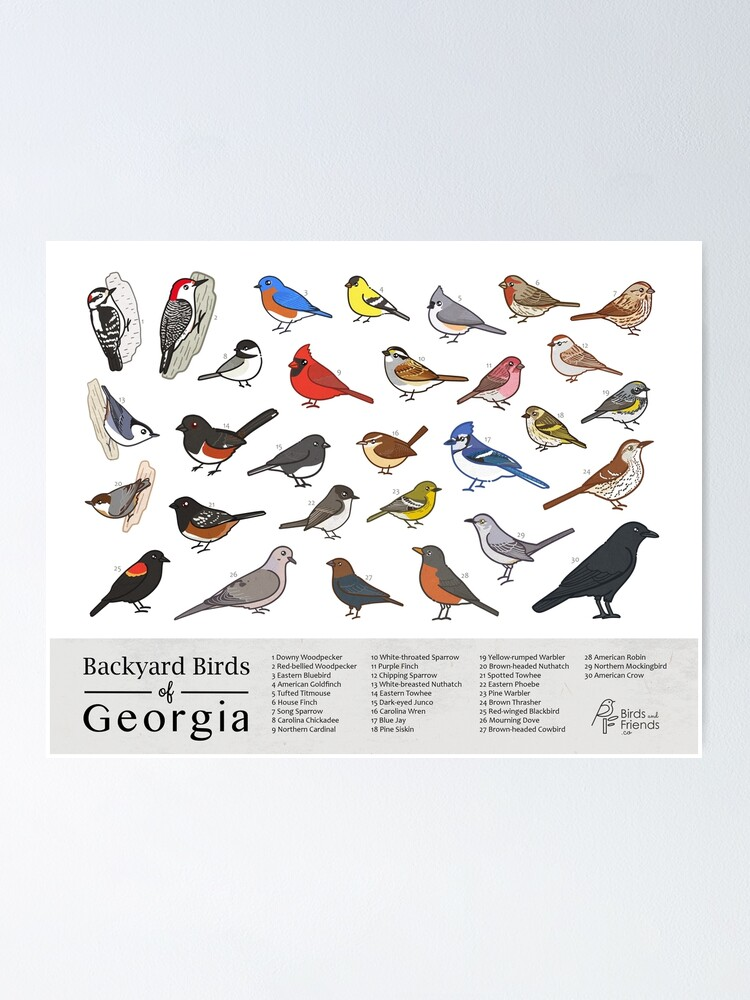 Alternate view of Georgia - Backyard Birds of Georgia Field Guide Print - Bird Art Print - BirdsandFriends.co Poster