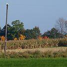 Autumn shine by RuthFroehlinger