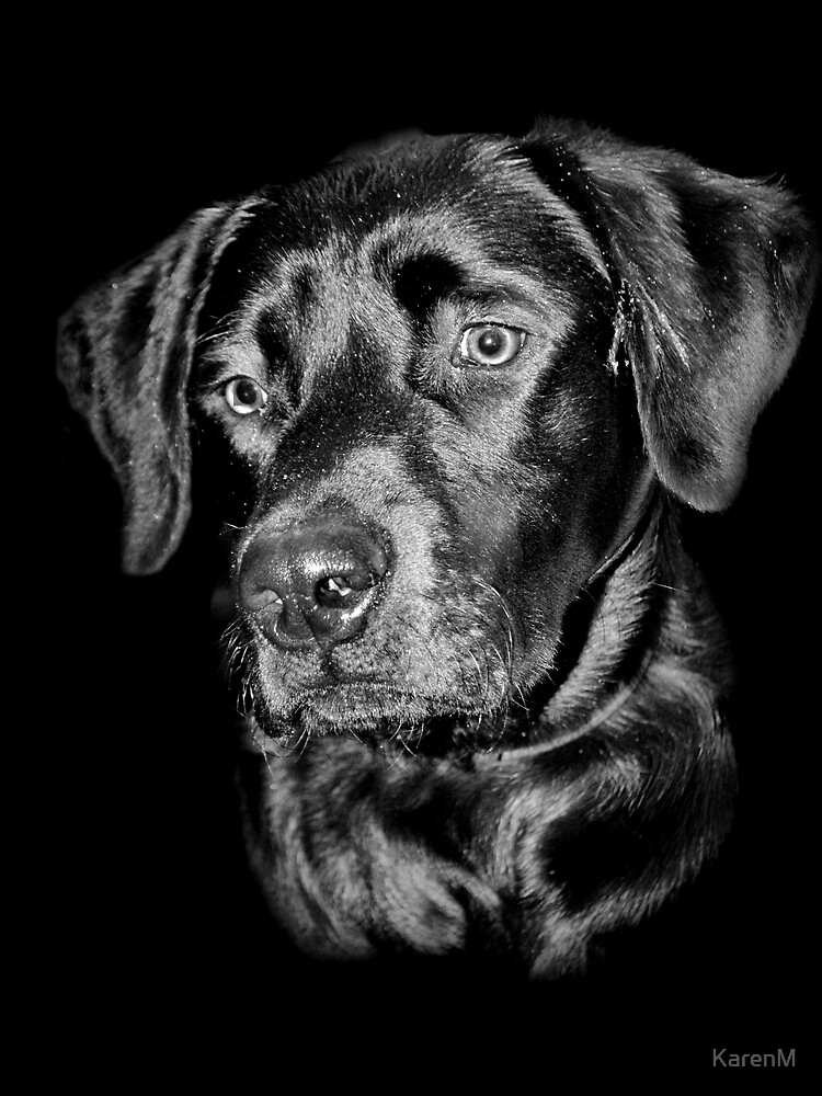 Labrador Portrait by KarenM