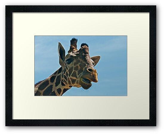 Giraffe SAYING Hello by TJ Baccari Photography