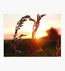 Pastoral sunset Photographic Print