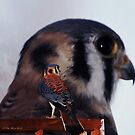 Bird of Prey by Pat Moore