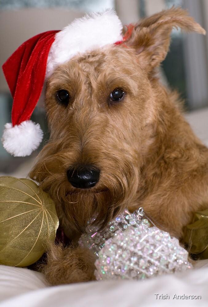 Irish Terrier Christmas by Trish  Anderson