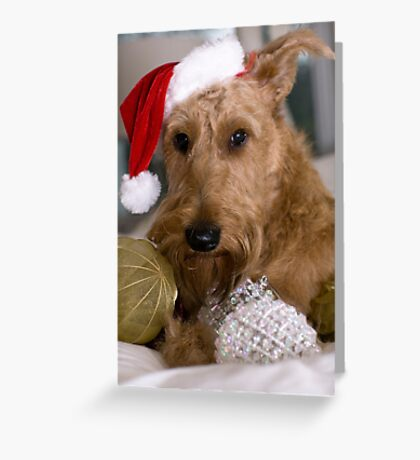 Irish Terrier Christmas Greeting Card