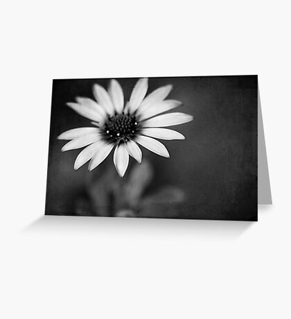 simply daisy Greeting Card