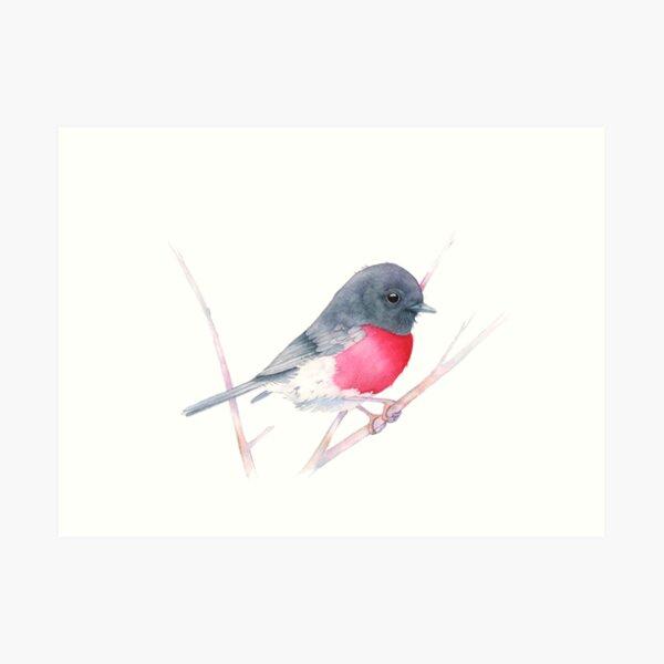 Rose Robin Art Print