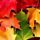 Fall Leaves by BlaizerB