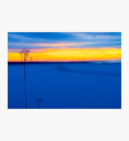 Guardians By The Sea Photographic Print