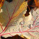 Dew Drops by djnoel