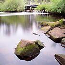 Southern Stream, Tasmania by Alex Wise