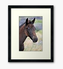 Black Beauty's Filly Foal Framed Print