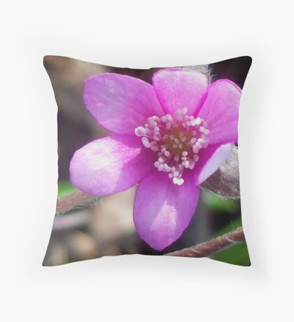 First Hepatica of the season  Throw Pillow