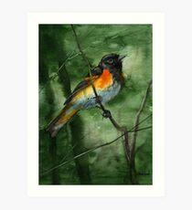 American Redstart Art Print