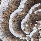 Lichen Layers by tasadam