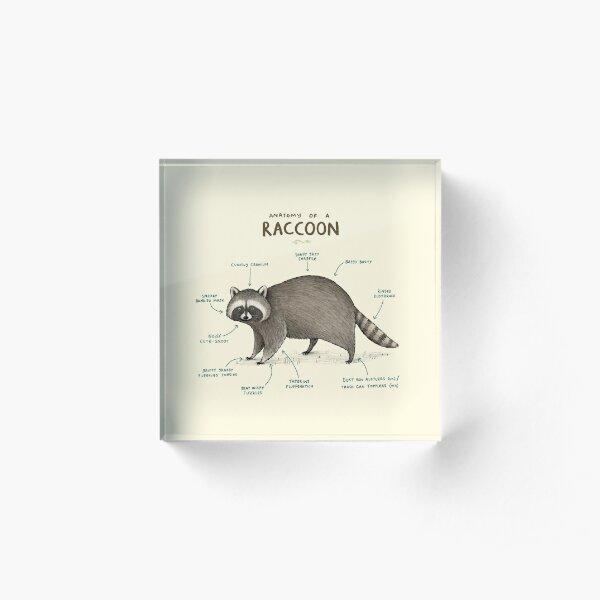 Anatomy of a Raccoon Acrylic Block