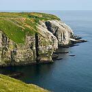 Gannets at Cape Saint Mary's - Newfoundland by Raymond J Barlow