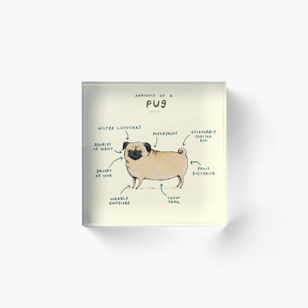 Anatomy of a Pug Acrylic Block
