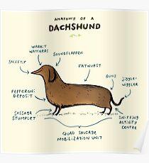 Anatomy of a Dachshund Poster